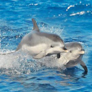 Delfíny a pláž GüiGüi