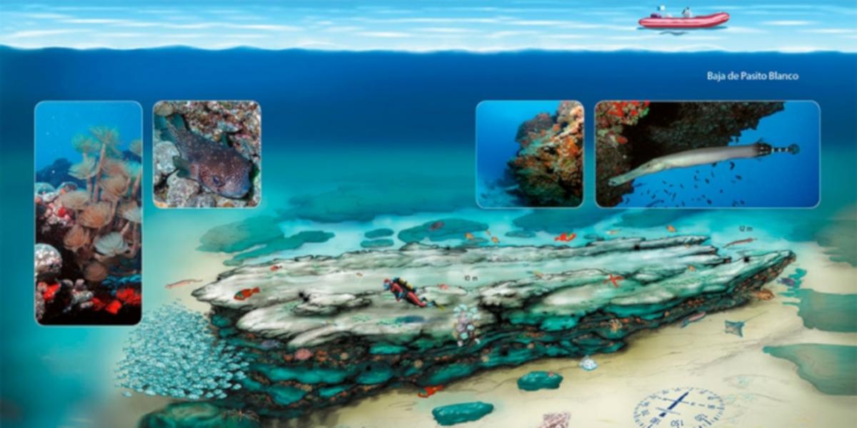 Gran Canaria - potápanie a snorchľovanie - Pasito Blanco
